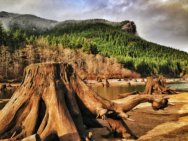 """Lonesome George"" @ Rattlesnake Lake"