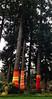 tree socks - Fall City, WA
