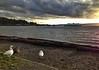 Lincoln Park, West Seattle
