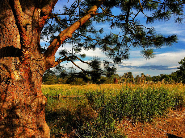 Marymoor Park-Redmond, WA 8-2012