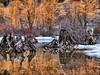 sunlight on winter trees-Rattlesnake Lake 1-14-2013