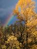 rainbow & autumn leaves along Snoqualmie River near Three Forks Dog Park-Snoqualmie, WA 11-2009