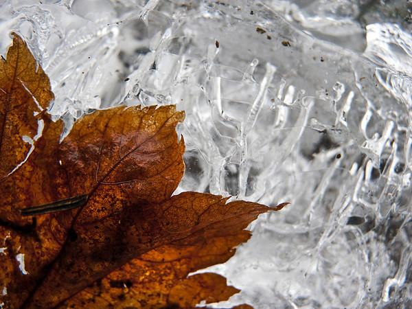 leaf on ice block-Iron Horse trail, Exit 38, Garcia, WA 1-22-2011
