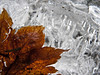 leaf on ice block-Iron Horse trail, Exit 38, Garcia, WA 1-22-2011