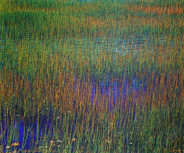 Green and Yellow Grass, Blue Water, Upper Hadlock Pond, Maine
