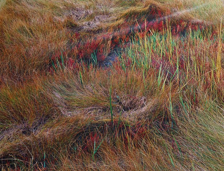 Salt Meadow I