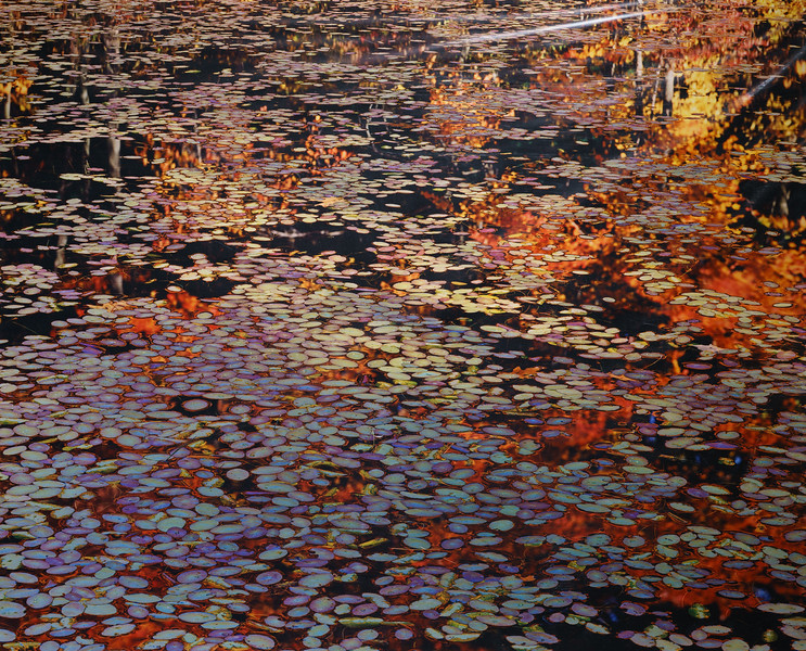 Lily Pond With Reflections,  Walden, Concord, Massachusetts 1991