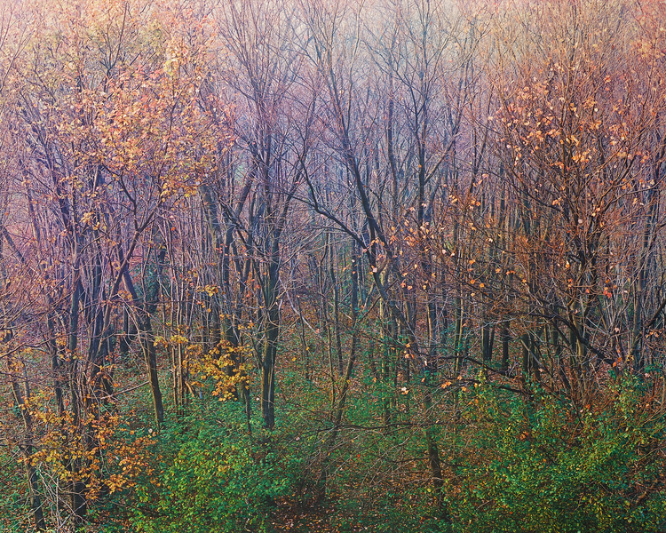 Fall Morning, Interstate 90, Weston, Massachusetts JW 0025