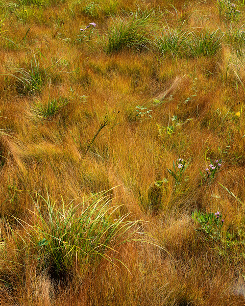 Grasses Up There