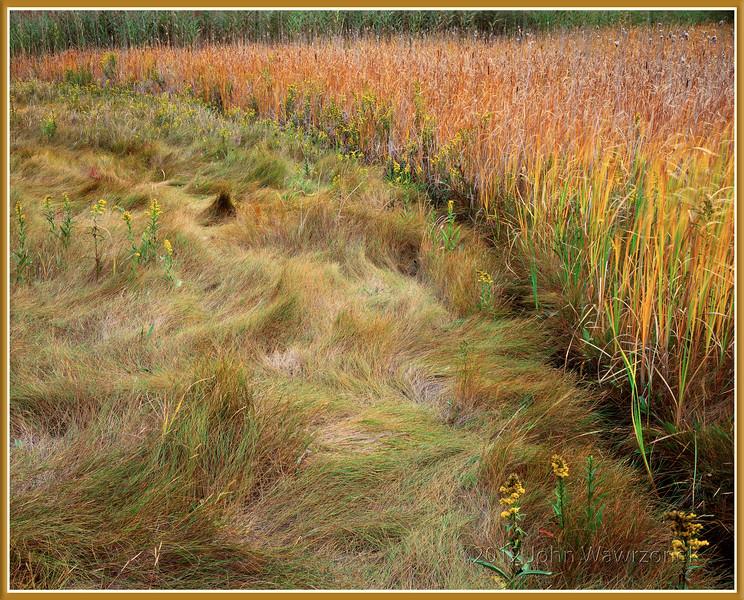 Cattails & Salt Marsh Grass