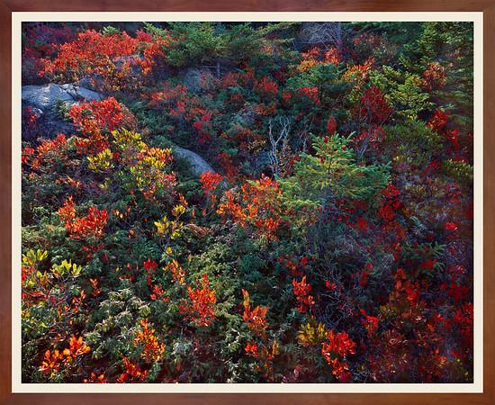 Wild Spruce & Berries