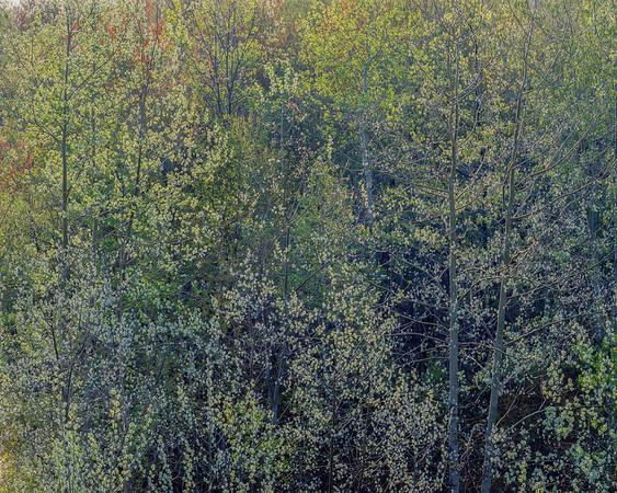 Leaf Light II
