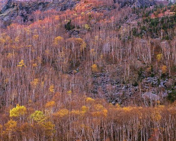 Mountainside II