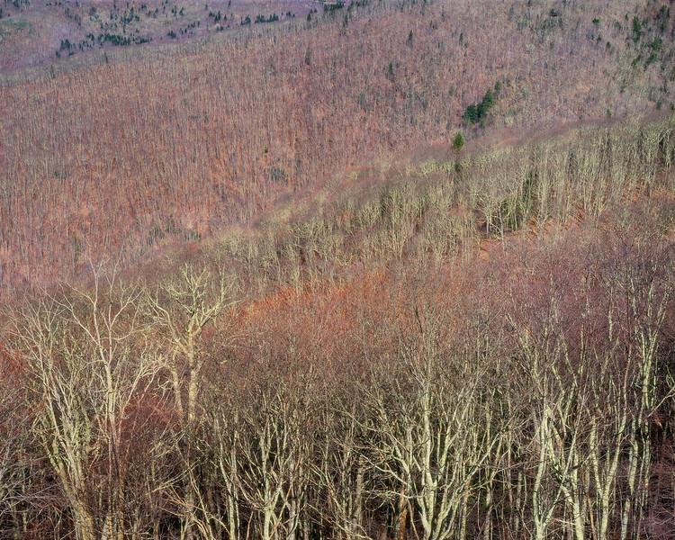 Blue Ridge Hillside I
