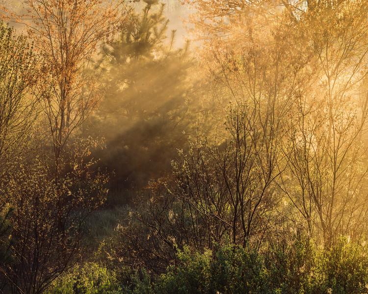 Streaming Sunrise Near Beaver Brook