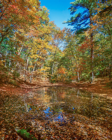 Vernal Pool Near Thoreau's Cabin