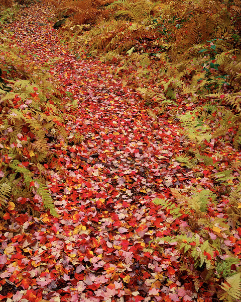 Path With Leaves And Ferns