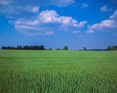 Grain and Blue Sky