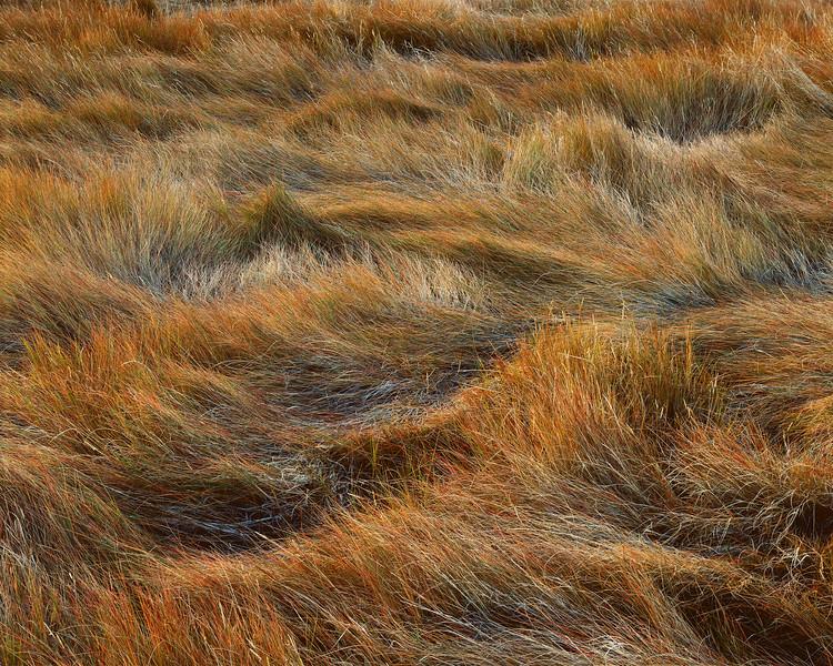 Salt Marsh Just Before Sunset
