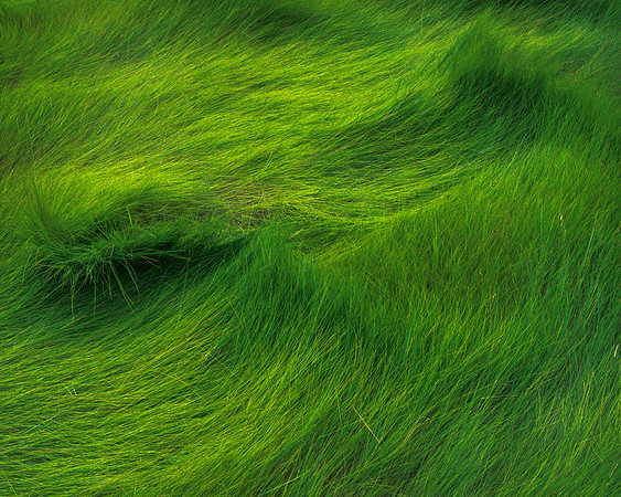 Eying The Green