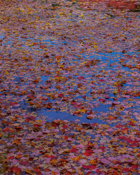 Leaves On Water II