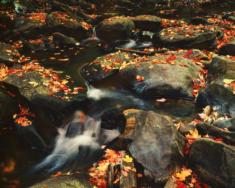 Stream with Rocks and Leaves