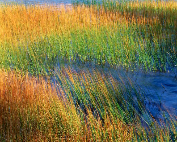 Reeds, Wind & Water III