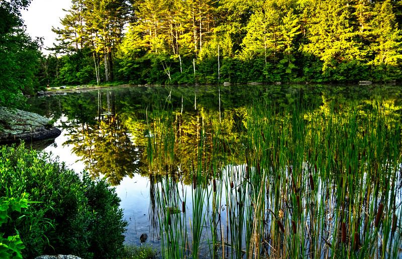 Reflection or vegetation?