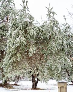 Ice Storm-2738