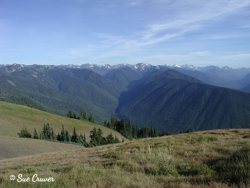 Olympic Mountains Valley