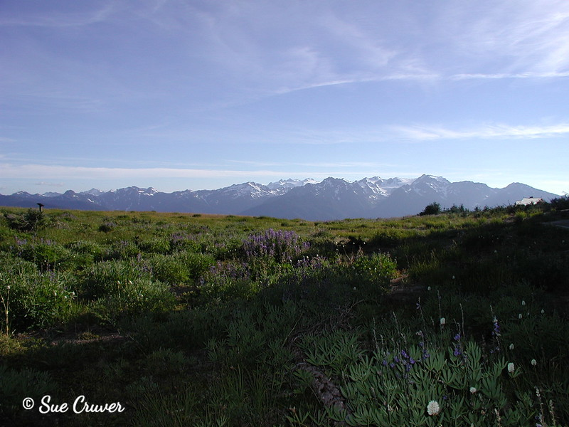 Olympic Mountain Peaks
