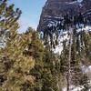 Pines and Peak