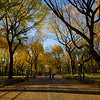 Central Park<br /> Fall<br /> The Mall