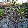 Central Park<br /> Conservatory Garden