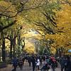 Central Park<br /> Fall, Autumn