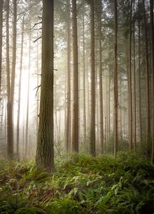 Bridle Trails Mist