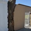 Tree in Wall
