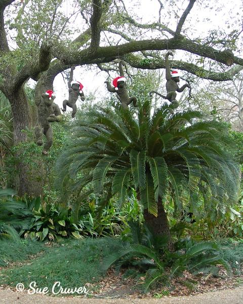 Santa Monkeys in Tree