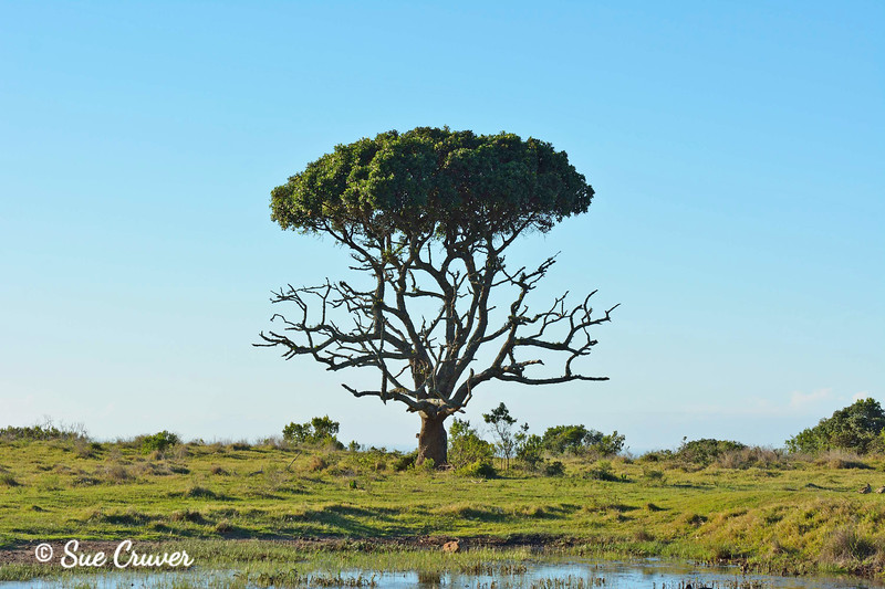 Game Reserve Tree