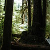 Sol Duc Forest Shadows