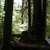 Sol Duc Forest Shadows