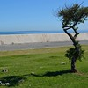 Tree by Sea