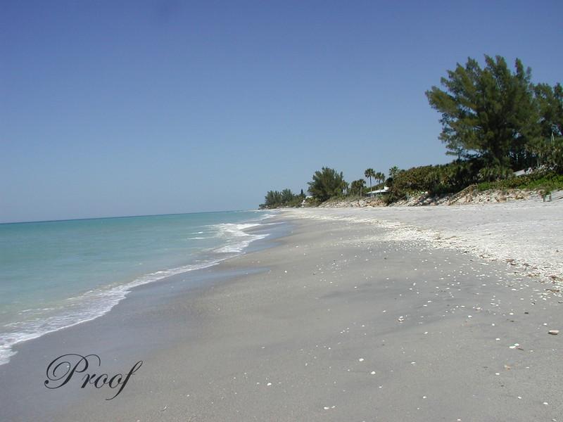 Shells Along the Beach