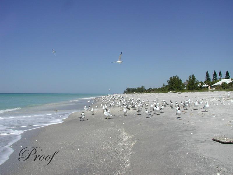 Bird Arrivals