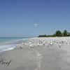 Birds and Beach