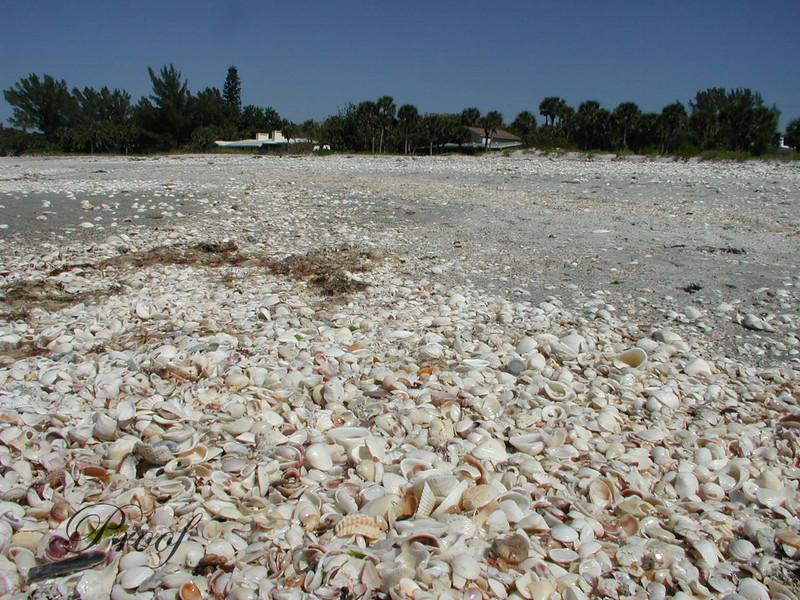 Shells Everywhere