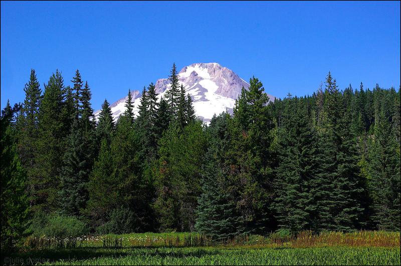 Mount Hood from Summit Meadow