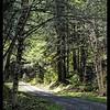 Still Creek Road
