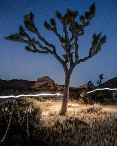 Joshua Tree Between dusk and twilight