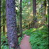 Upper Salmon River Trail